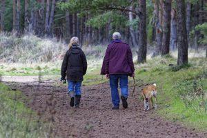 מסלולים מומלצים לטיול עם הכלב בטבע